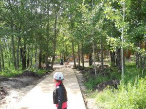 Деревянные тротуары в лесопрке