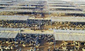 Неисчислимое количество скота тут забьют в Курбан байрам