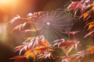 Солнечный день, тенечек - счастье для паука
