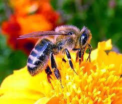 Пчелы - щедрый подарок от Аллаха и Его забота о нас